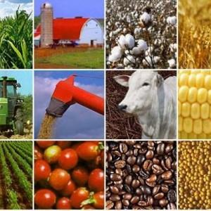 Exportação de commodities tem queda e atinge mercado em MG