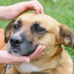 Petland já encontrou um lar para mais de 400 mil animais de rua